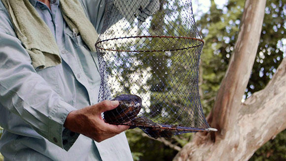 イチモンジタナゴの繁殖に必要なマルドブガイも確認できた