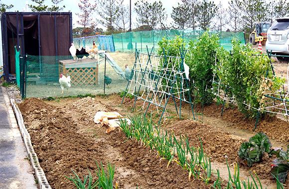 長尾統括工場長の発案で工場敷地内に作った菜園。技能実習生たちが管理している。奥にあるのはニワトリ小屋。ニワトリは長尾統括工場長が卵からかえし、育てたもの。毎日とれたての野菜と卵が実習生たちの食卓にのぼる